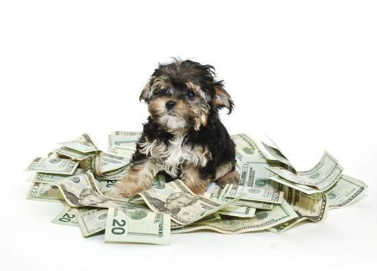 dog-money
